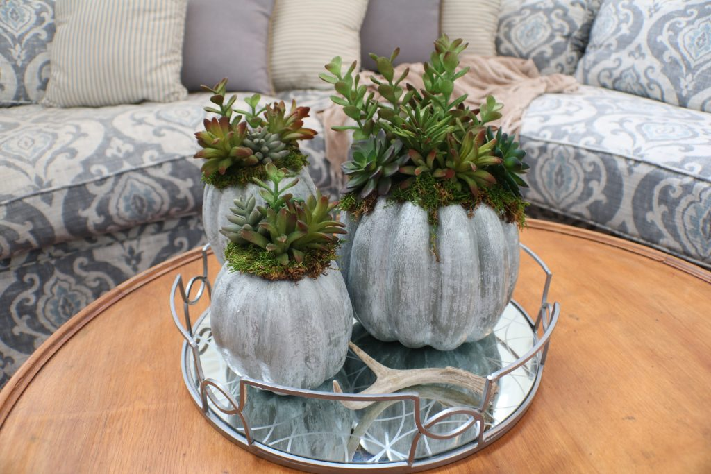 DIY succulent filled pumpkin planters