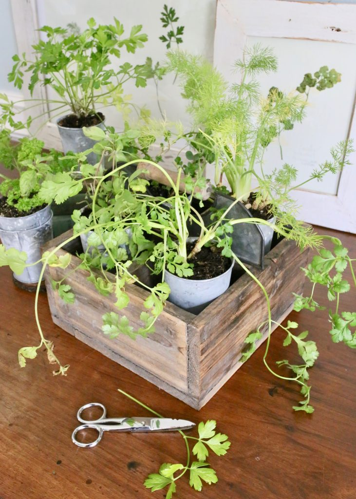 herb garden: parsley, thyme, mint