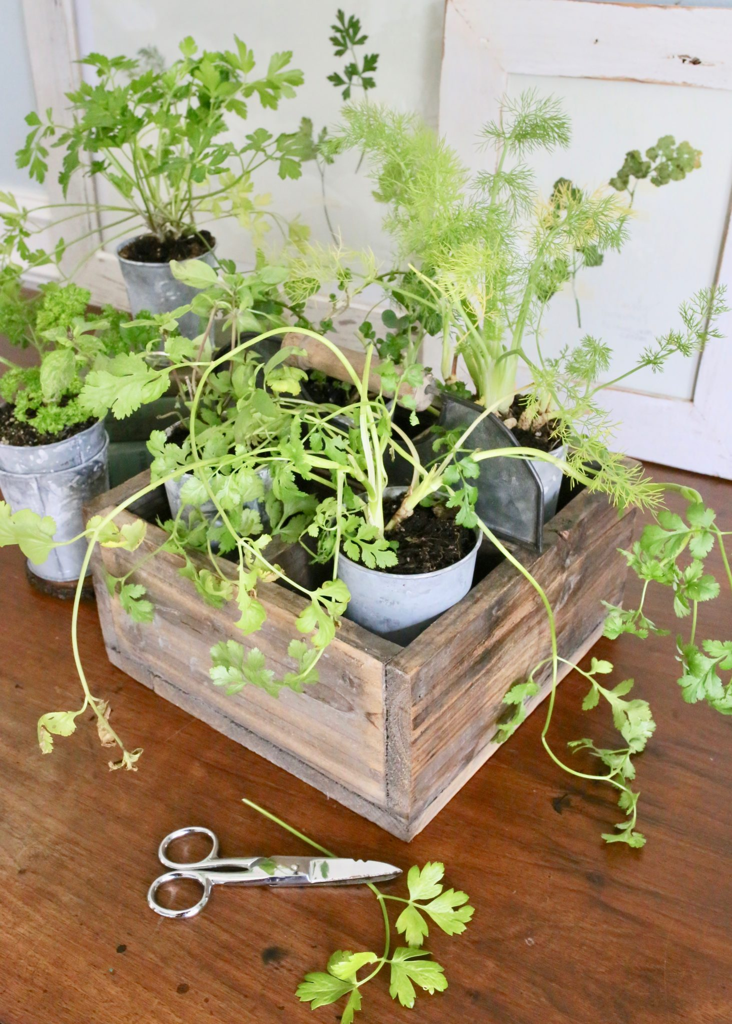 How To Press Plants Flowers Or Herbs In The Microwave Cutertudor